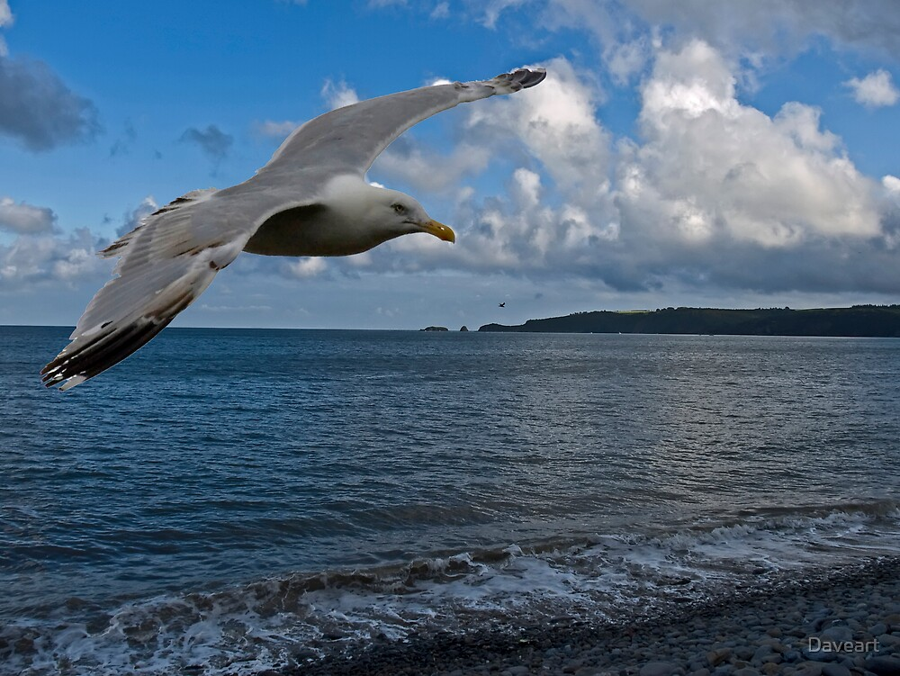 Seagull in flight by Daveart