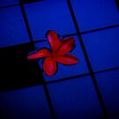 a red leaf on a blue still swimming pool by ragman
