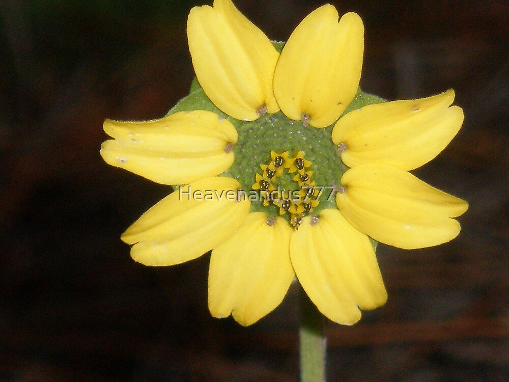 Yellow Beauty by Heavenandus777