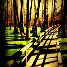 Mississippi Swamp by Hollie Cook