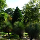 Grass Trees - Blue Mountains Botanic Gardens by Marilyn Harris