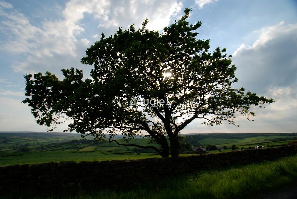 Tree in Lealholme by dougie1