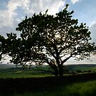 Tree in Lealholme by dougie1