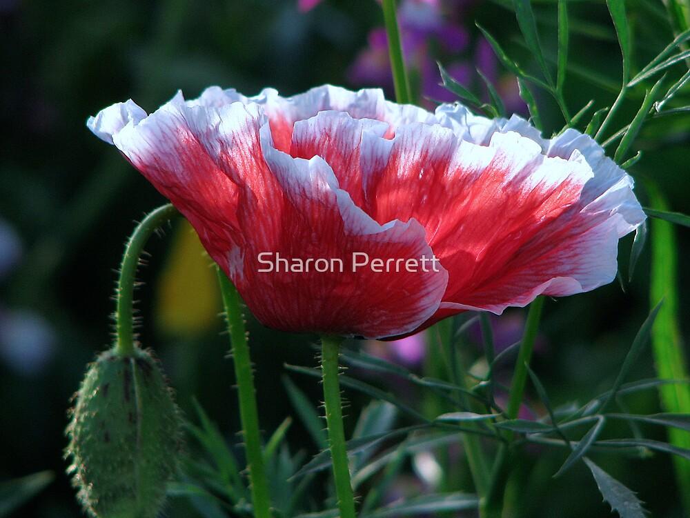 Roundabout Magic - Poppy 4 by Sharon Perrett