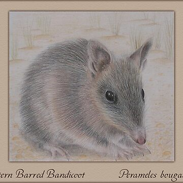 Western Barred Bandicoot by KristenJoy