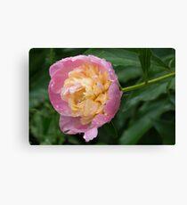 Petals and Drops - Soft Pink Peony Canvas Print