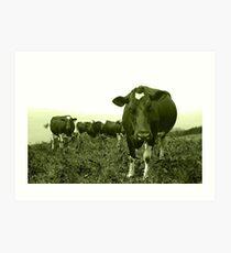 Annoyed cow Art Print