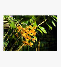 Tropical Impressions - Bright Yellow Orchid Smileys  Photographic Print