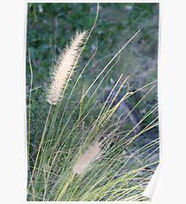 Grass 2008 Poster