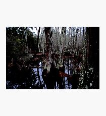 Bald Cypress Photographic Print