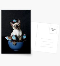 Bird Puss Postcards