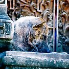 Temple Dog by sparrowdk