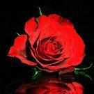 Christmas Rose by Dawn B Davies-McIninch