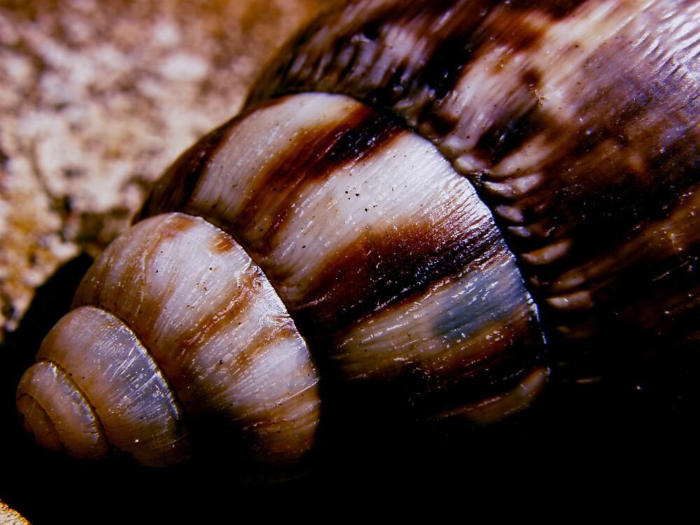 Snail by Aimerz