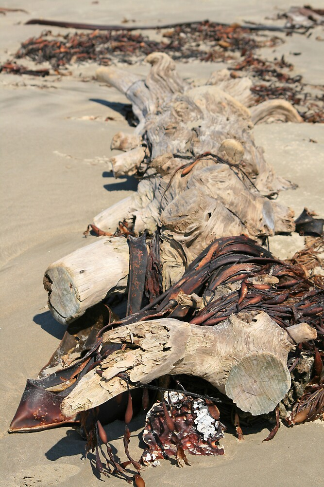 Moeraki Beach Sea Weed by DRWilliams