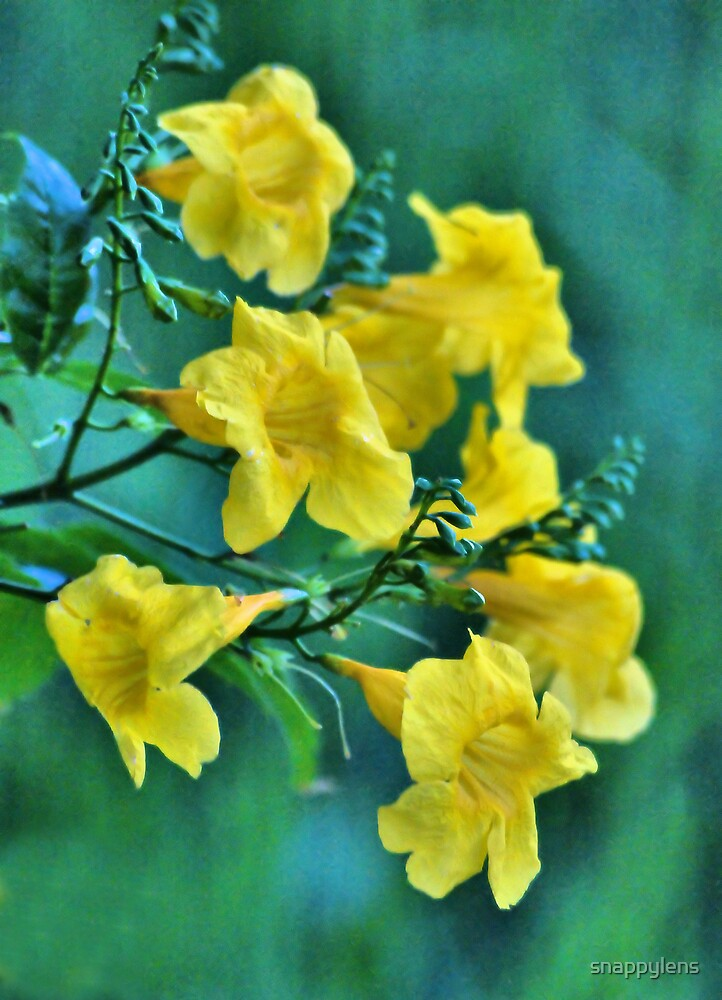 yellow flowers by snappylens