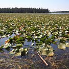 Indian Lake by zumi