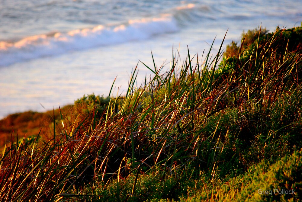 Beach Grass by Greg Pollock