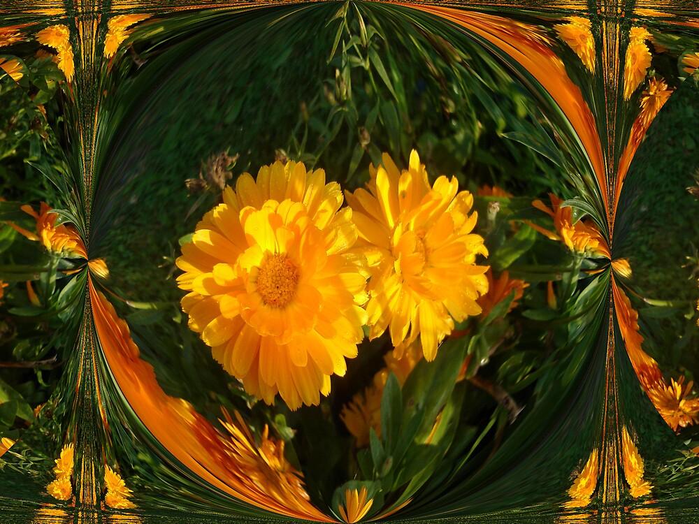 Calendula by Doreen