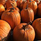 Pumpkin Patch by Patricia Lupien