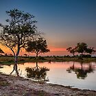 Sunset at waterhole by Marylou Badeaux