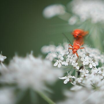 Raw Bug Love by stefanChirila