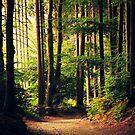 Woods Are Calling by Neli Dimitrova