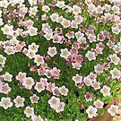 many bright flowers by mrivserg