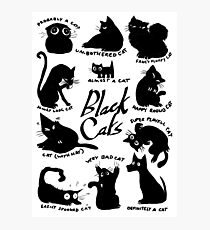 Black Cats Of Many Types Photographic Print