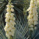 Desert Blooms #2 by dragonsnare