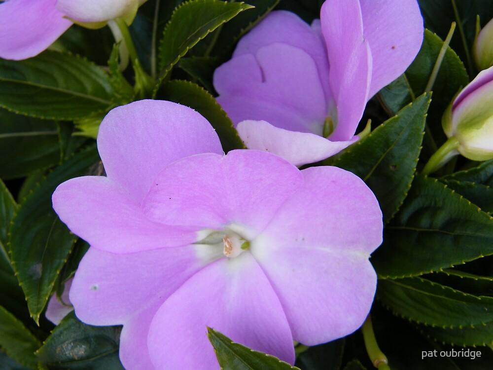 Purple Lizzie by pat oubridge