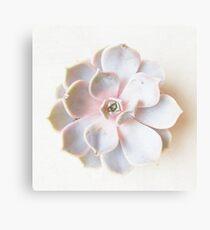 Pink Succulent II Metal Print