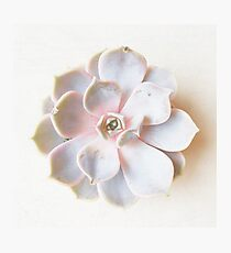 Pink Succulent II Photographic Print