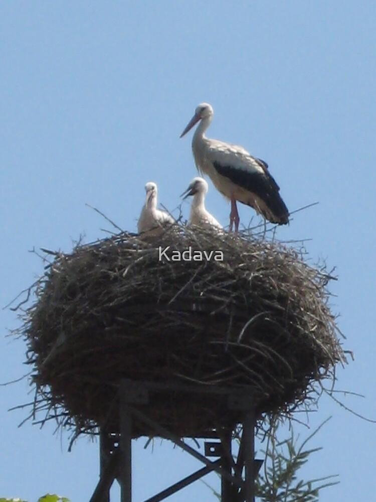 Stork by Kadava