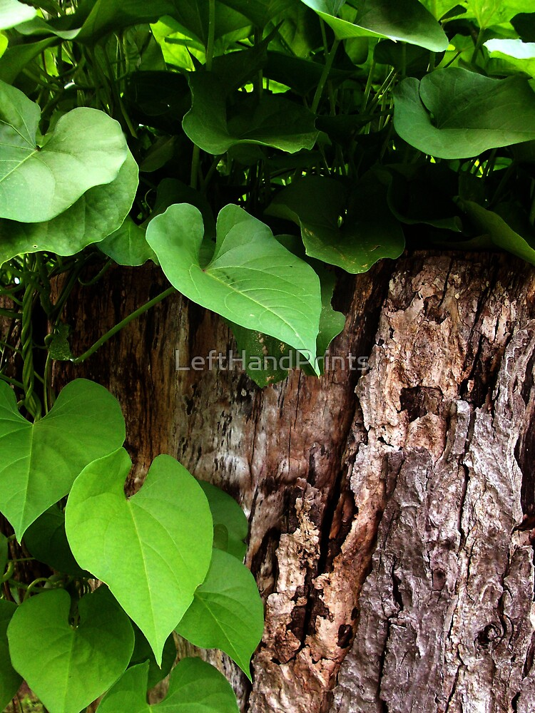 Leaves and Bark by LeftHandPrints