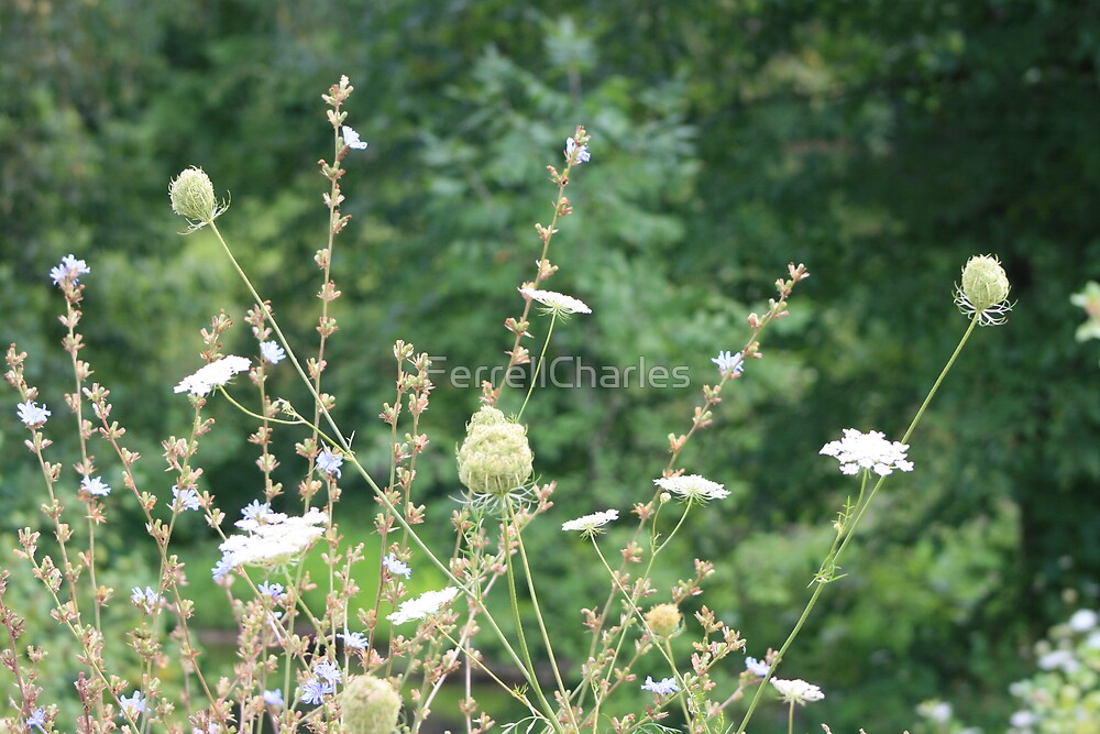 Summer Breeze by FerrellCharles