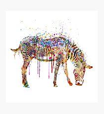 Zebra watercolor painting Photographic Print