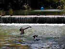 Swimming in Barton Creek by Cathy Jones