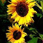 Summer sunshine by jchanders