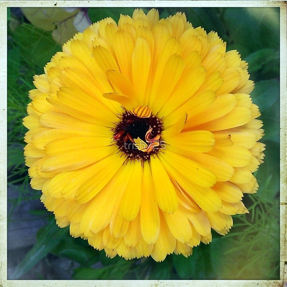 Yellow Flower by trish725