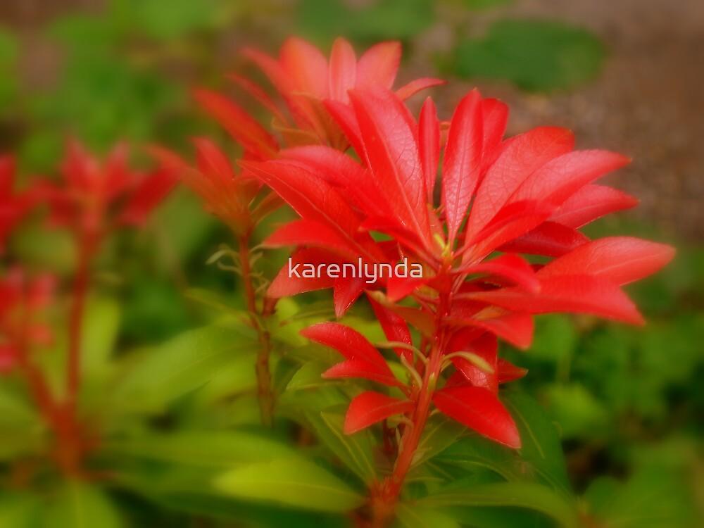 red foliage by karenlynda