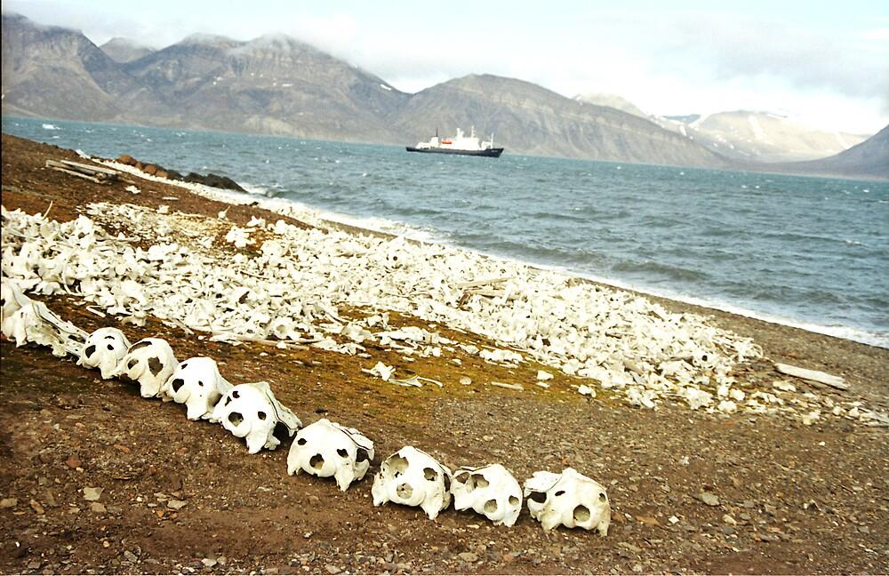 Death beach by Caitlin Fitzsimmons