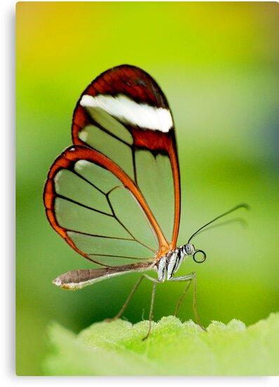 Transparent beauty by Mirka Rueda Rodriguez