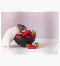 Snoozy loves strawberries Poster