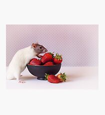 Snoozy loves strawberries Photographic Print