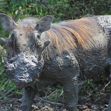 Uganda Queen Elizabeth National Park Kasenyi Warthog Warthog Pumbaa Waterhole Billabong Mud Mud Mud Bath Mud Bath Fango by eickys