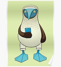 Blue-footed Booby with Phone Poster