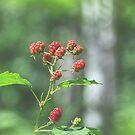 Blackberry dressed in red von nurmut