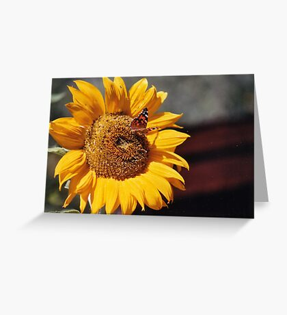 Sunshine and Butterflies Greeting Card