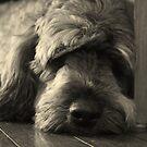 My dog 'Taj' by VashR31